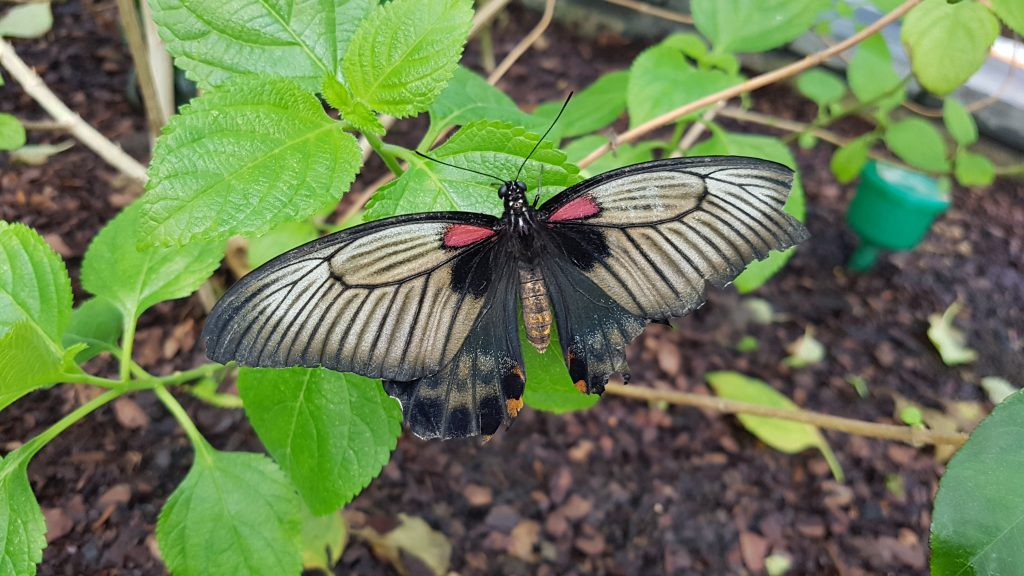 Butterfly House - National Botanic Garden of Wales